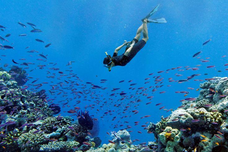 Skorkeling Gorgone Reef Lifou - New Caledonia