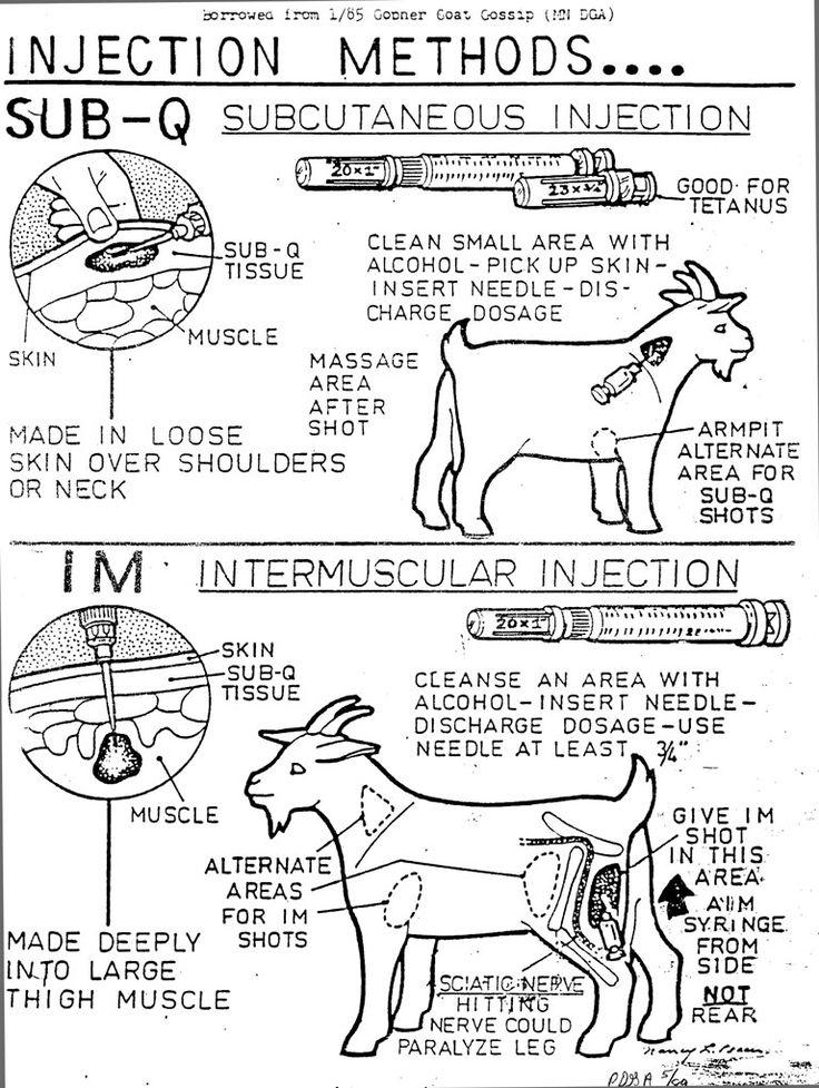 The Piedmont Dairy Goat Association • Western North