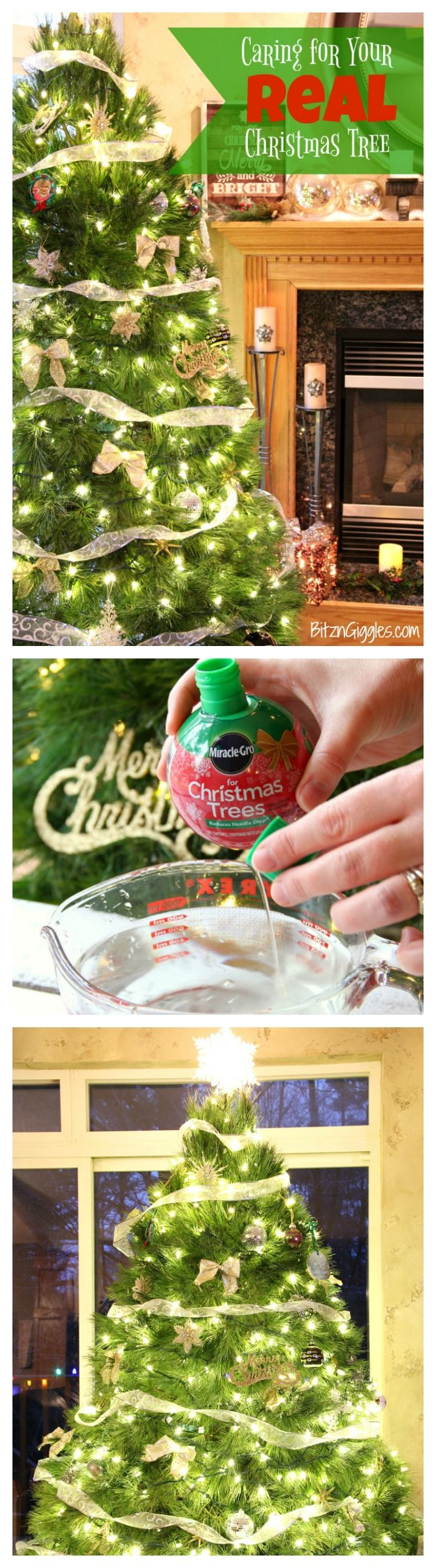 Caring for Your Real Christmas Tree - Tips on caring for a natural Christmas tree so it lasts all season long! #BestTreeEver #sponsored @MiracleGro