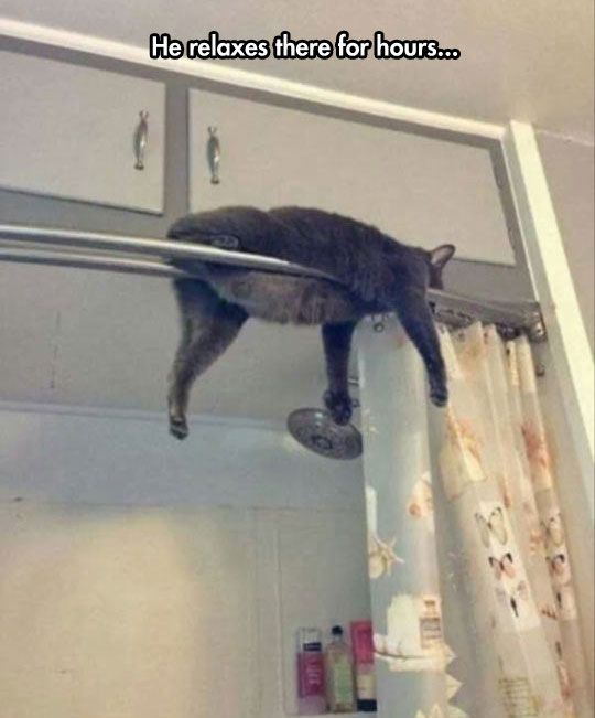 Monorail Cat Is Offline For Cleaning