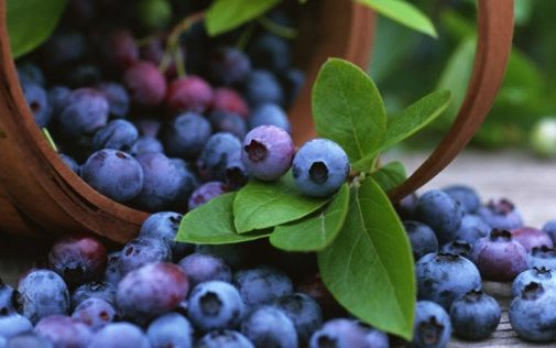 All about blueberries  http://www.worldofblueberry.com/blueberries-health-benefits/