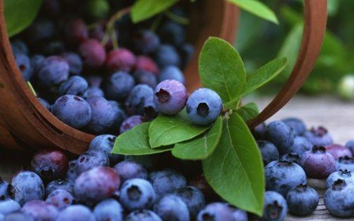 All about blueberries  http://www.worldofblueberry.com/blueberries-health-benefits/