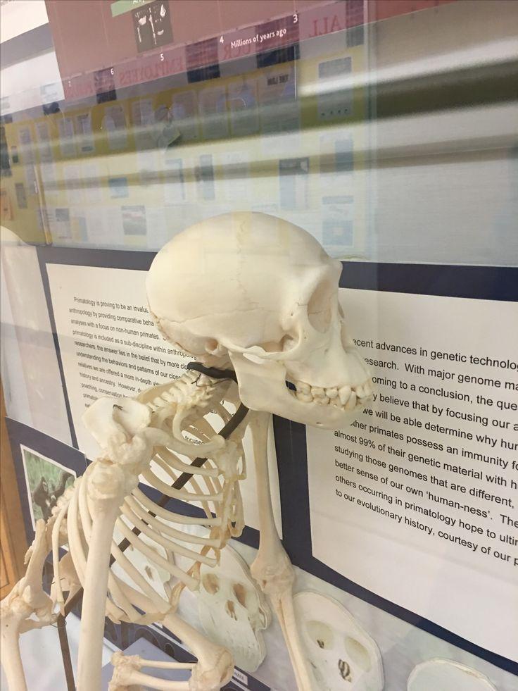 118 best Skull anatomy images on Pinterest | Skull anatomy, Skull ...