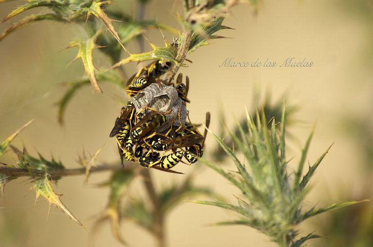 ...nido de avispas... http://fc-foto.es/36776909