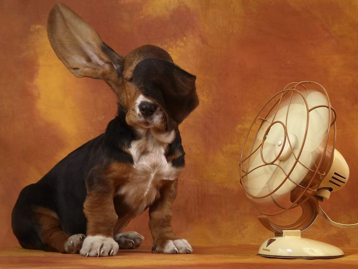 .: Hush Puppys, Funny Dogs, Basset Hound Pups, Dogs Day, Bassett Hound, So Funny, Bassethound, Cutest Things Ever, Dogs Photo