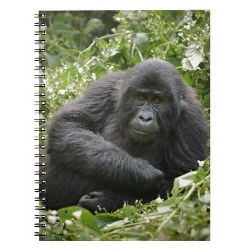 cool young mountain gorilla spiral note book
