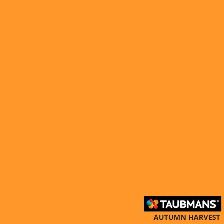 #Taubmanscolour #autumnharvest Paint colour used on feature wall