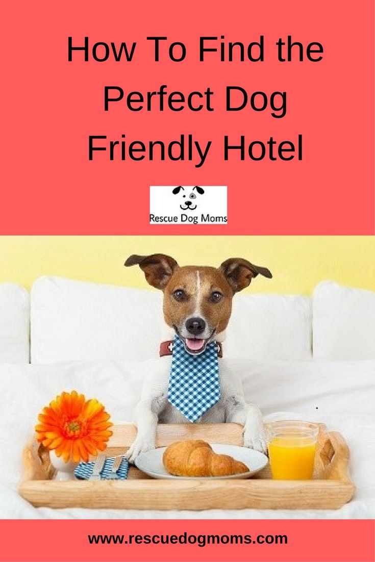 What you need to know when choosing a dog friendly hotel.