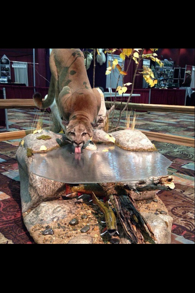 Pin by Hannah Schmidt on Taxidermy and Pelts  Taxidermy