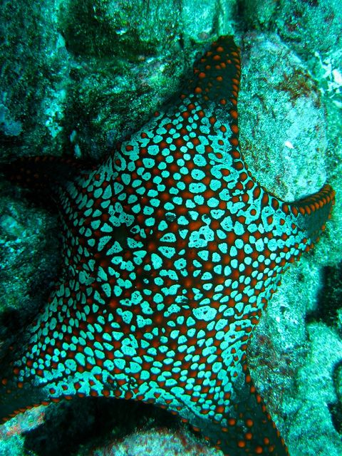 Turquoise Starfish...gorgeous!