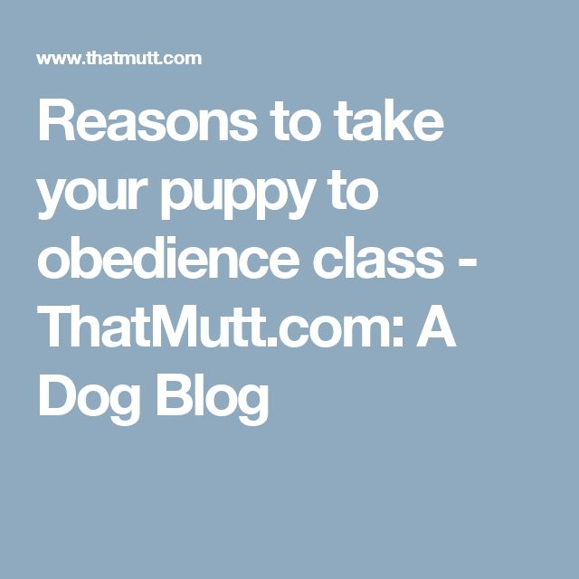 Reasons to take your puppy to obedience class - ThatMutt.com: A Dog Blog