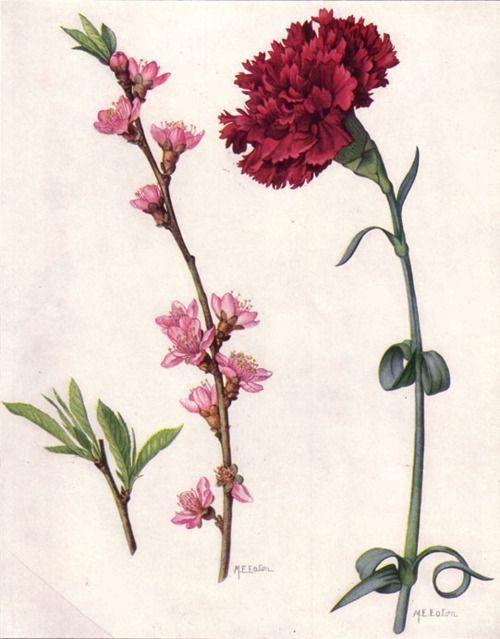 Peach Blossom  Red Carnanation,   Mary E. Eaton,   1917