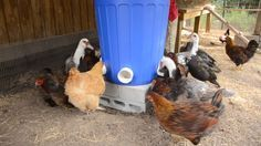 3 Bag EASY Automatic Chicken Feeder - J&J Acres
