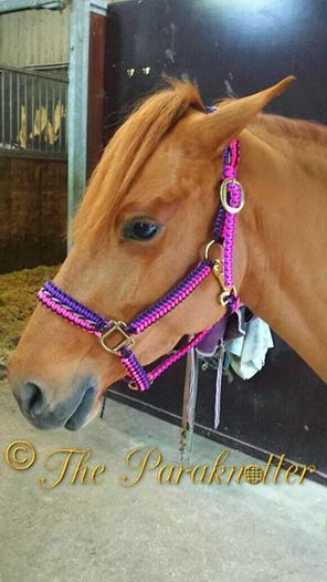 #Paraknotter #Paracord #Horses #Horsehalter