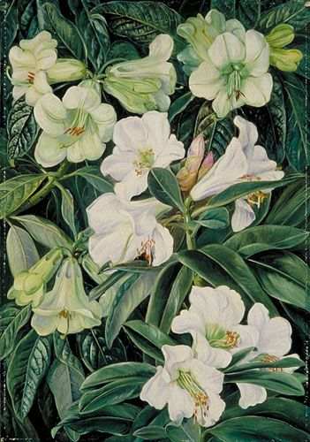Lilies by Marianne North. Marianne North, a Victorian artist, travelled the world painting the flowers and landscapes she visited. The Marianne North Gallery, opened in Kew Gardens in 1882, houses over 800 of her paintings. Its the only permanent solo exhibition by a female artist in Britain. http://www.kew.org/collections/art-images/marianne-north/index.htm