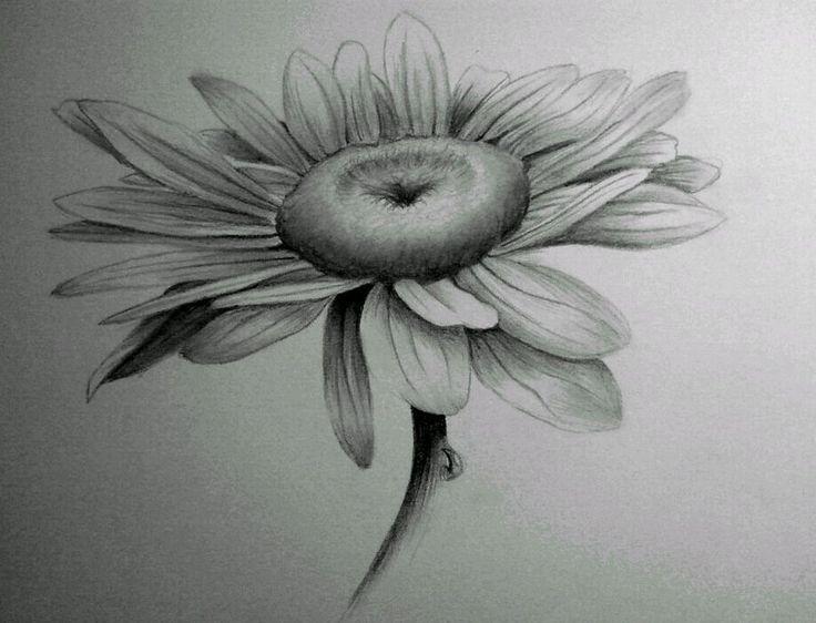 43 best Shading Flowers images on Pinterest | Sunflowers ...