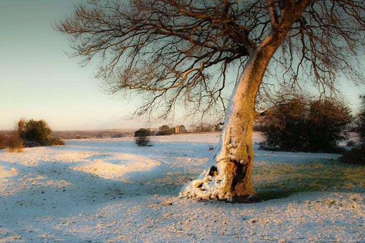 Snow on Rodborough Common