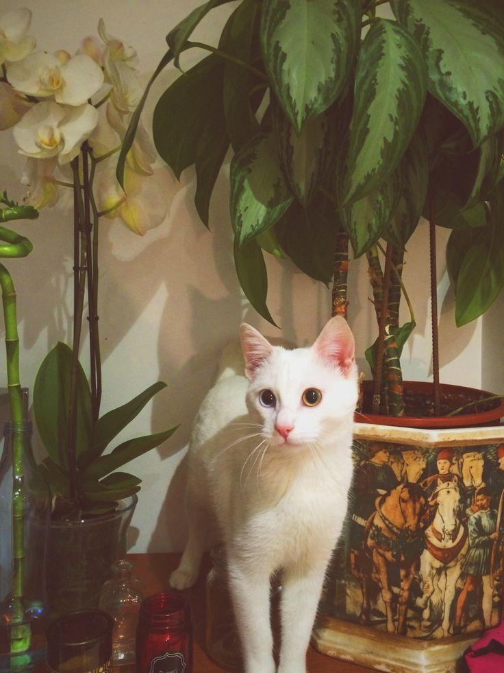 Ximena na jungle