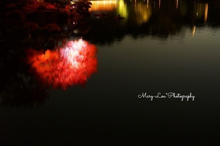 赤い木|mary-lou*Photography