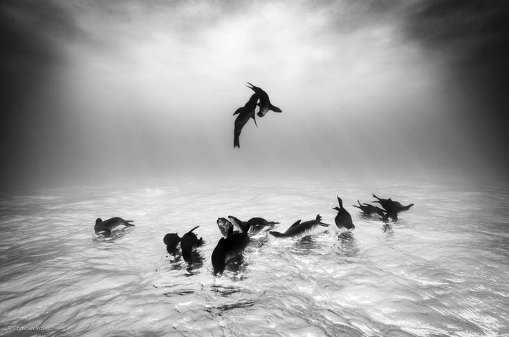 Sea lions dreams by christian vizl finalists of the 2014 wildlife photographer of the year competition will leave you wanting