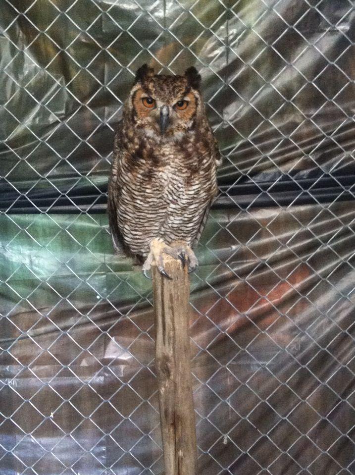 Zoológico de Aves La Fantasía en Bucaramanga, Santander