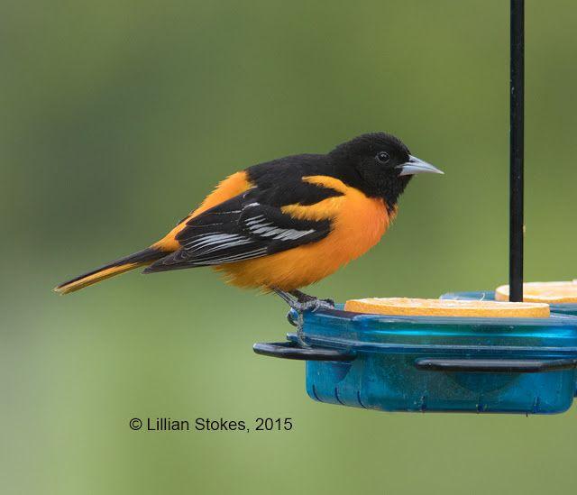 153 best images about gardening stuff on pinterest gardens bird