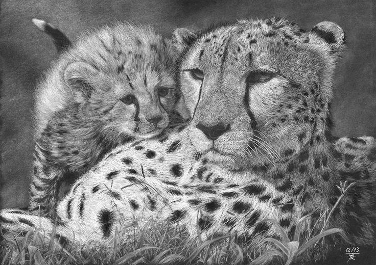 Cheetah - Guépards  Crayon blanc sur papier noir Dessin en format 42 x 30 cm