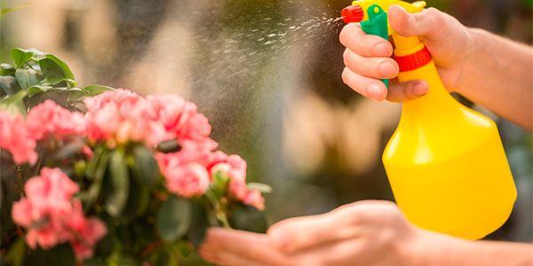 11 Receitas caseiras de inseticidas e repelentes biológicos fáceis de fazer