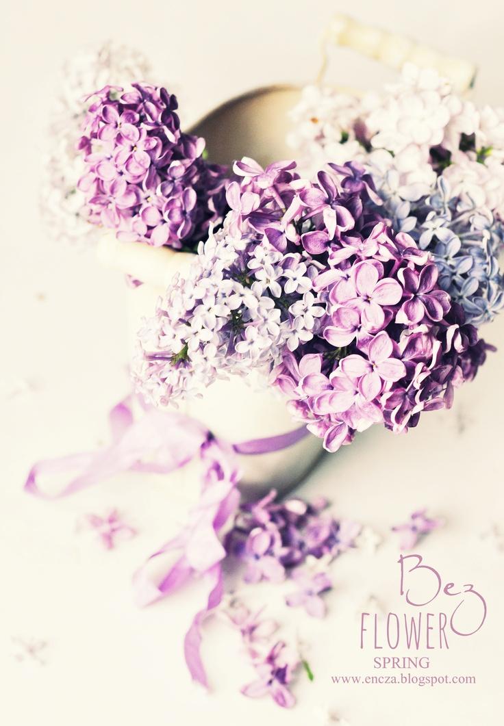 bez, fiolet, violet, lilac