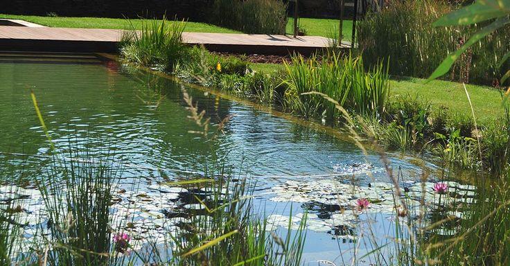 Fynbos Landscapes | Natural Swimming Pools
