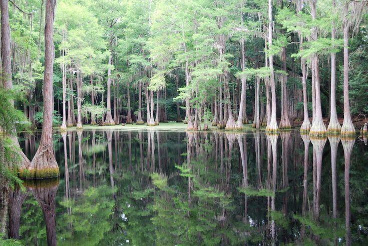 Cypress Tree Swamp, FLORIDA