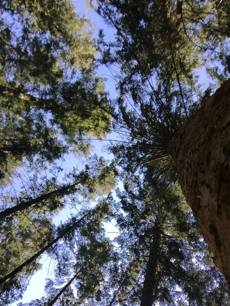 Mooi is het om omhoog te kijken als je in t bos bent. Hier bij de Lemelerberg vlakbij de wolfskuil.