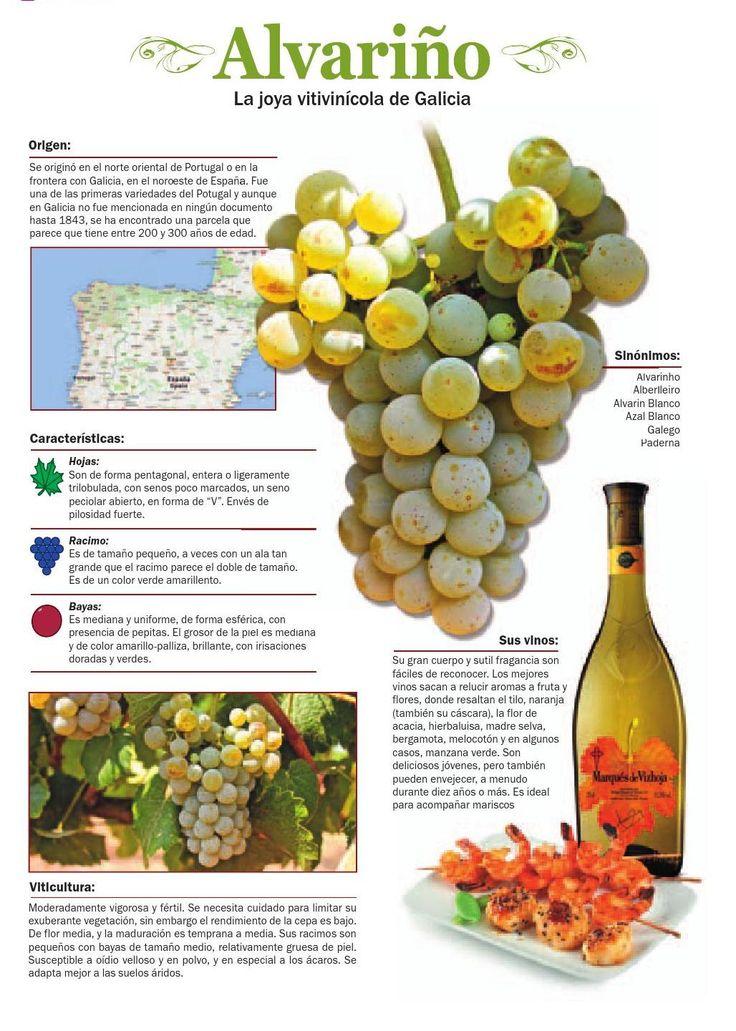 #Alvariño, la joya vitivinícola de Galicia