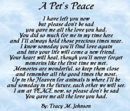 Pet Loss Quotes 19 Best Pet Goodbye Quotes Images On Pinterest  Grief Pets And Cats
