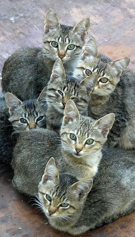 nice: cats, 6 of them, so many in one place, and all of the same style, and wow all looking at me! Hi, kitties, Meow... for you too! lol