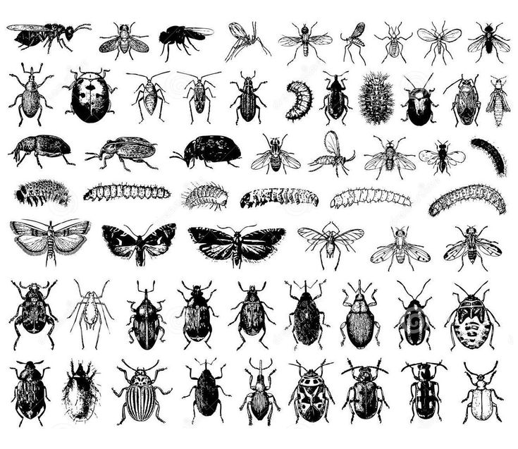 Free Coloring Page Difficult Insects A Sheet Of Each