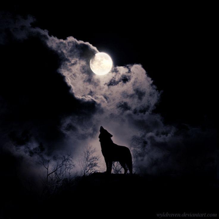 """Howl"" ~  (Digital Art, Photomanipulation) ~ by Wyldraven @ DeviantArt. Quite a Cliché :-)"