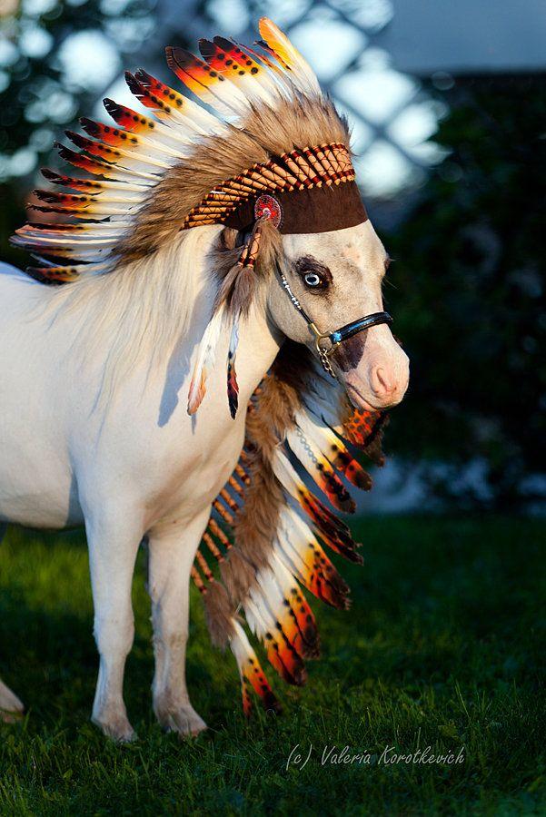 American Miniature Horse   Portrait   Pinterest   Chief ...   Mini Horse Costume