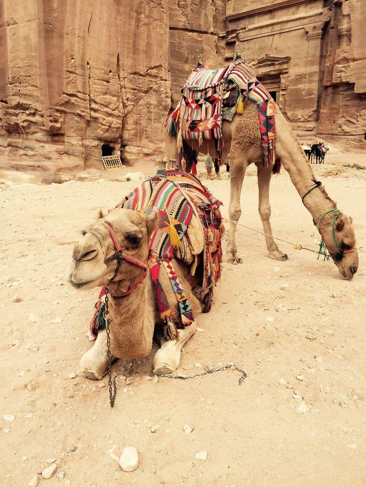 #jordan #planetescape #camel