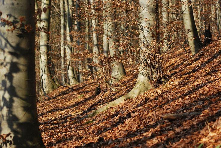 V lese Iliavka