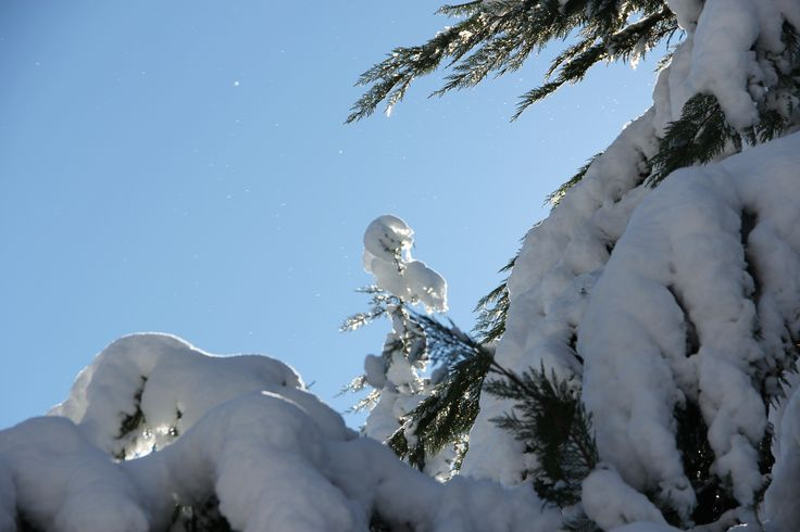 looks like a snow man on top of this Leland Cyprus