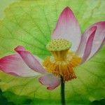 Artworks by Jiang Debin - lotus paintings (3)
