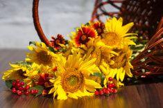 «Подсолнухи» с цветами и Viburnum находится в корзине stock photo