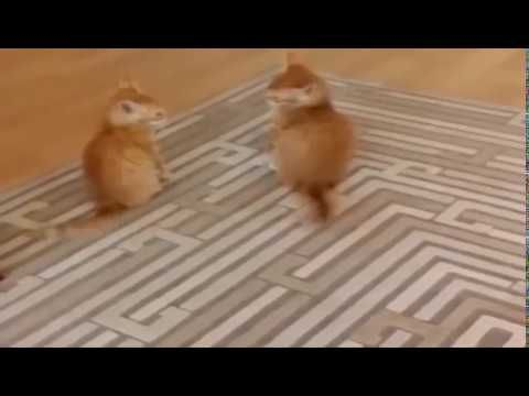 Funny Cats Compilation 2017 - Best Funny Cat Videos Ever   Funny Vines Compilation -  #animals #animal #pet #cat #cats #cute #pets #animales #tagsforlikes #catlover #funnycats Subscribe us for more interesting videos Ever seen naughty cats doing amazing stuff? Watch them now and forget your sadness or worries forever. These pets make you laugh and happy by all means. Watch funny... - #Cats