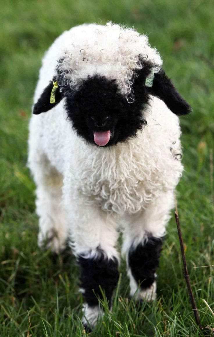 Northumberland farmer welcomes unseasonal arrivals as ...