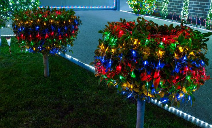 Wrap your rainbow fairy lights around all plants in your garden #vibrant #christmas
