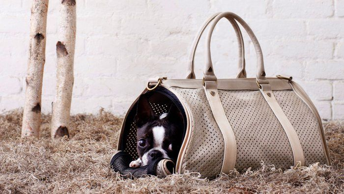 Cute puppy in a dog carrier