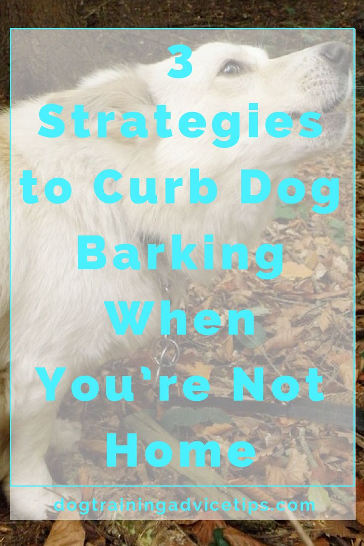 Having a job outside the house means having a good chunk of time that you are away from your dog. Here are 3 Great Strategies to Stop your Dog Barking When You're Not Home