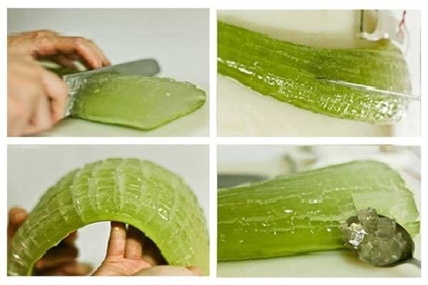 Aloe vera felhasználása