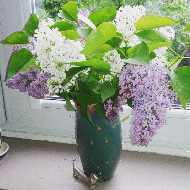 #lilac